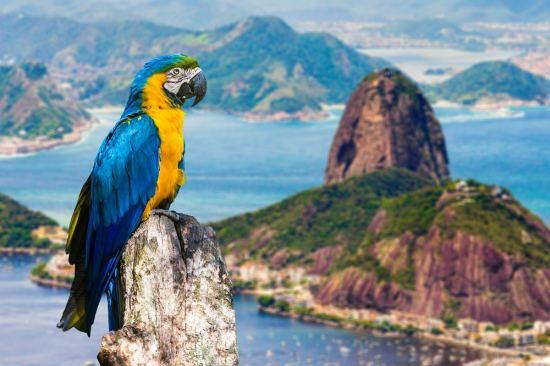 Екскурзия до Аржентина и Бразилия - пътуване в ритъма на Южна Америка